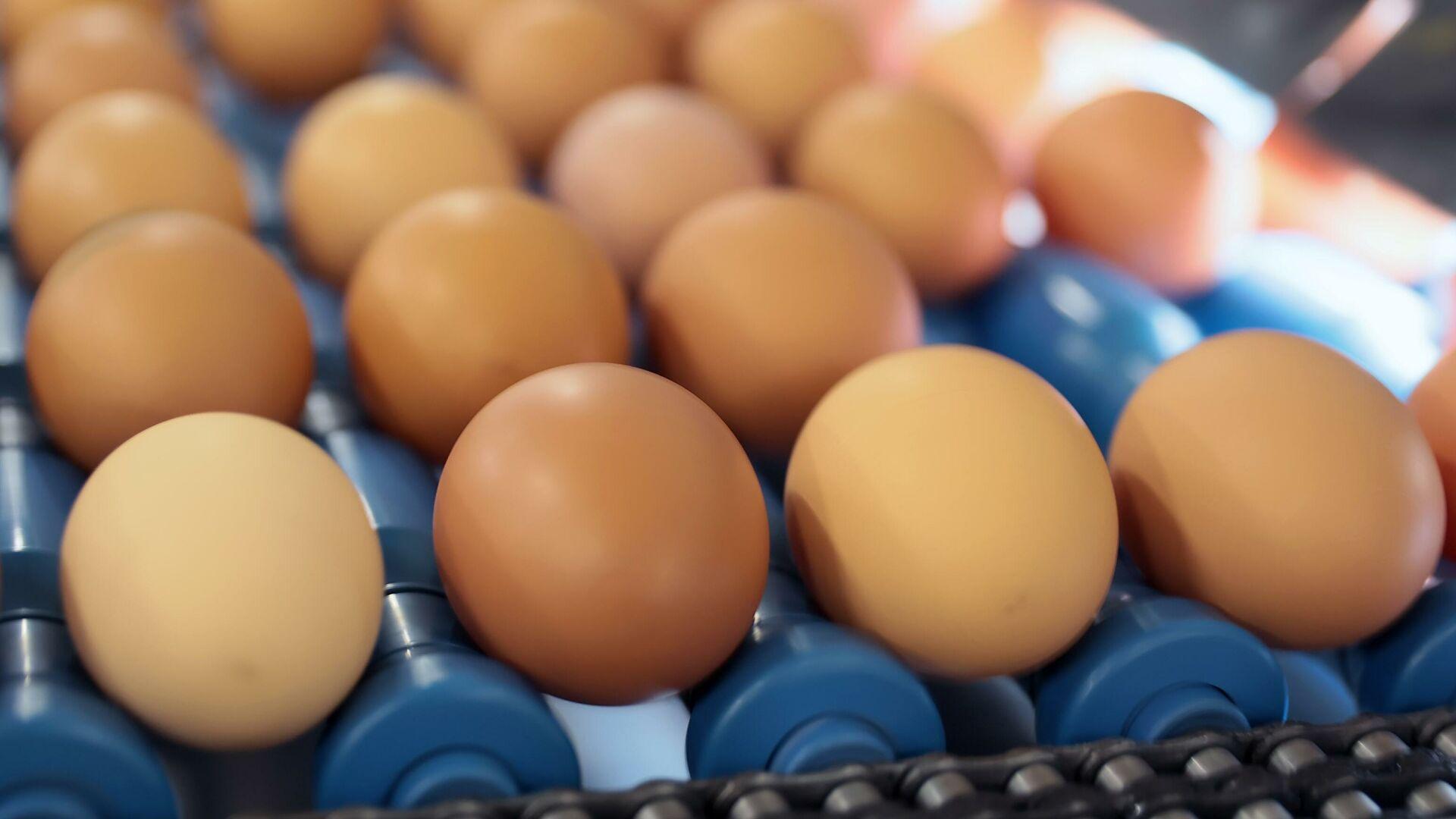 Россиянам грозит дефицит яиц? Экономист оценил ситуацию