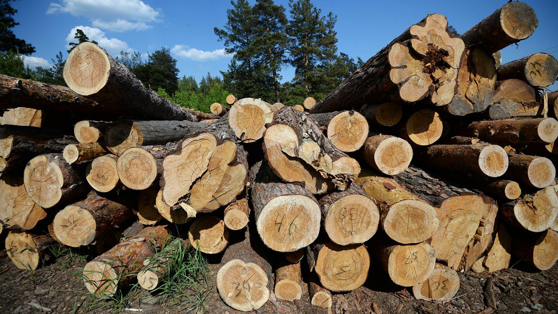 Ученые нашли экономичный способ переработки опилок на лесозаготовках